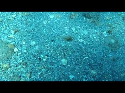 Можете ли да видите рибата