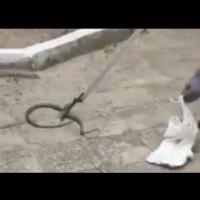 Змия в двора на детска градина