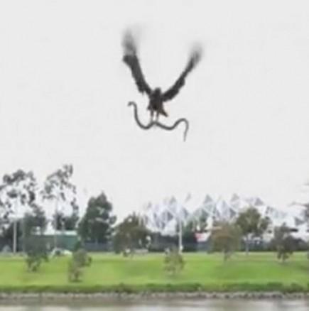 Орел хвърли змия върху хора