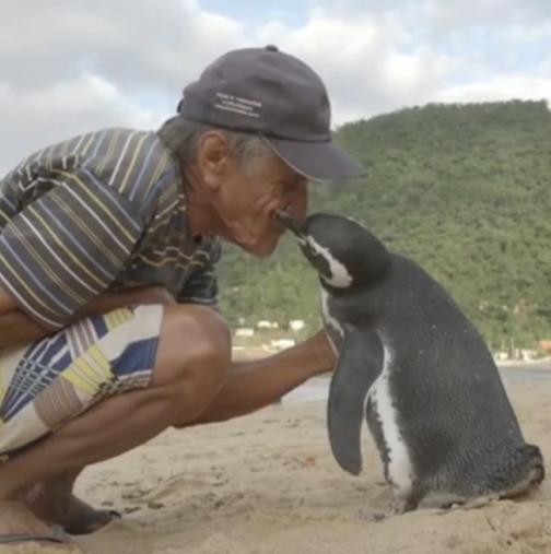 Спасението на едно малко и сладко пингвинче