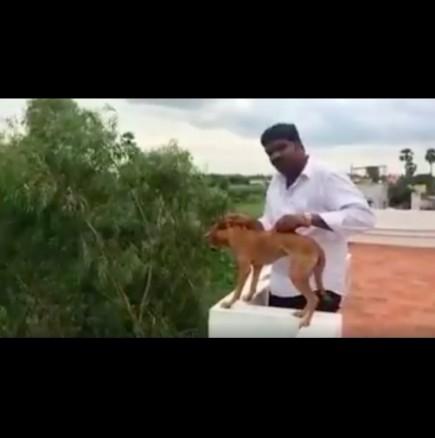 Индиец хвърли кученце от балкона