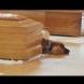 Куче не иска да се отдели от ковчега на стопанина си