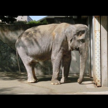 Слонът който почина