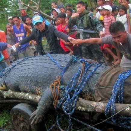 Филипинци хванаха огромен крокодил и решиха да се щракнат с него за спомен