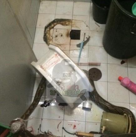 Питон в тоалетната
